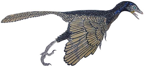 Archaeopteryx lithographica - Pedro José Salas Fontelles (flipped).jpg