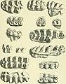 Archives du Mus©um d'histoire naturelle de Lyon (1878) (20138404380).jpg