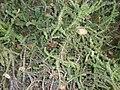 Arizona Cactus Garden 064.JPG