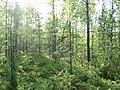 Asinovsky District, Tomsk Oblast, Russia - panoramio (115).jpg
