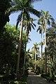 Aswan Kitchener island 3.jpg