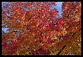 Autumn Leaves begin to fall-065 (5814137431).jpg