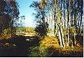Autumn at Bogingore - geograph.org.uk - 251449.jpg