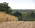 Awaiting harvest - geograph.org.uk - 1534806.jpg