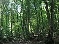 Azerbaijan forest 3.JPG