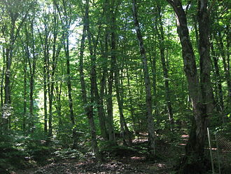 Forests of Azerbaijan - Caucasus mixed forest in the Quba District