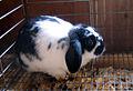 B&W bunny (121694376).jpg