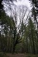 BD578917-Naturdenkmal Eiche Montclair.tif