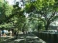 Bangalore street trees and traffic 1.jpg