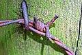Barbwire - Flickr - Stiller Beobachter (1).jpg