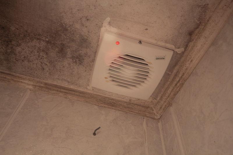 File:Bathroom-mold.jpg