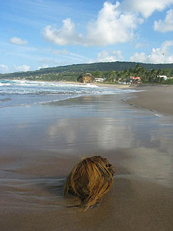 Bathsheba-beach.jpg