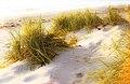 Beach shadows, Gotland, Sweden (6168676658).jpg