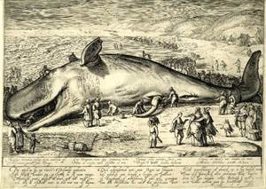 Jacob Matham - Engraving of a beached whale, after Hendrik Goltzius.