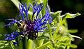 Bee (157153071).jpeg