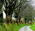 Beech-lined lane - geograph.org.uk - 1014787.jpg