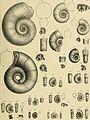 Beiträge zur Paläontologie und Geologie Österreich-Ungarns und des Orients - Mitteilungen des Geologischen und Paläontologischen Institutes der Universität Wien (1894) (20369642451).jpg