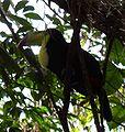 Belize22.jpg