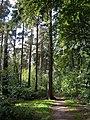 Ben Stedham's Wood - geograph.org.uk - 229133.jpg