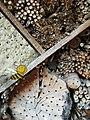 Berne botanic garden Insecthouse2.jpg