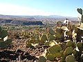 Beyond the prickly pears - panoramio.jpg