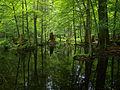 Białowieża National Park, Poland (4663843601).jpg