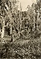 Big game shooting on the equator (1908 (1907)) (20361280722).jpg