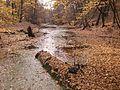 Biosphärenreservat Mittelelbe,Altwasser Möster Streng.jpg