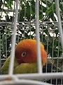 Bird, Krohn Conservatory.jpg