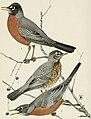 Bird-lore (1907) (14568953578).jpg
