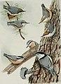 Bird-lore (1915) (14755098432).jpg