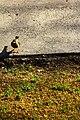 Bird (14947700861).jpg