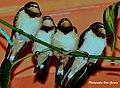 Birds 001.jpg
