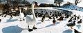 Birds in the wintertime.jpg