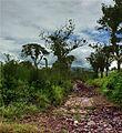 Birricito, Heredia, Costa Rica 3.jpg