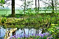 Bisham Woods (26559670834).jpg
