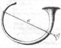 Blanchinus de tribus generibus tab II fig 16.png