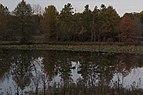 Blendon Woods-Walden Waterfowl Refuge in Fall 1.jpg