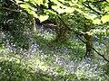 Bluebell glade - panoramio.jpg