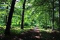Bois d'Acren 04.jpg