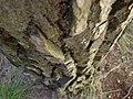 Bosc de Can Deu el 2004 13.jpg