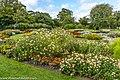 Botanic Gardens In Glasnevin (Dublin) (7951848696).jpg
