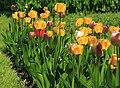 Botanic garden - Cluj-Napoca (4544200668).jpg
