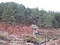 Boulders - geograph.org.uk - 1550155.jpg