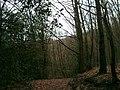 Brabandstaller Weg Ennepetal, 25.12.13 - panoramio (3).jpg