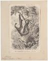 Bradypus didactylus - 1700-1880 - Print - Iconographia Zoologica - Special Collections University of Amsterdam - UBA01 IZ21000175.tif