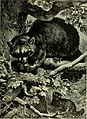 Brehm's Life of animals - a complete natural history for popular home instruction and for the use of schools. Mammalia (1896) (20413400345).jpg