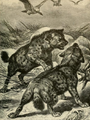 Brehms spotted hyenas.png