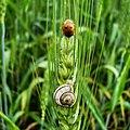 Bug and Snail.jpg