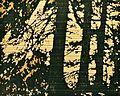 CAW-Holzschnitt-Joachim-Feldmeier-H0130.jpg